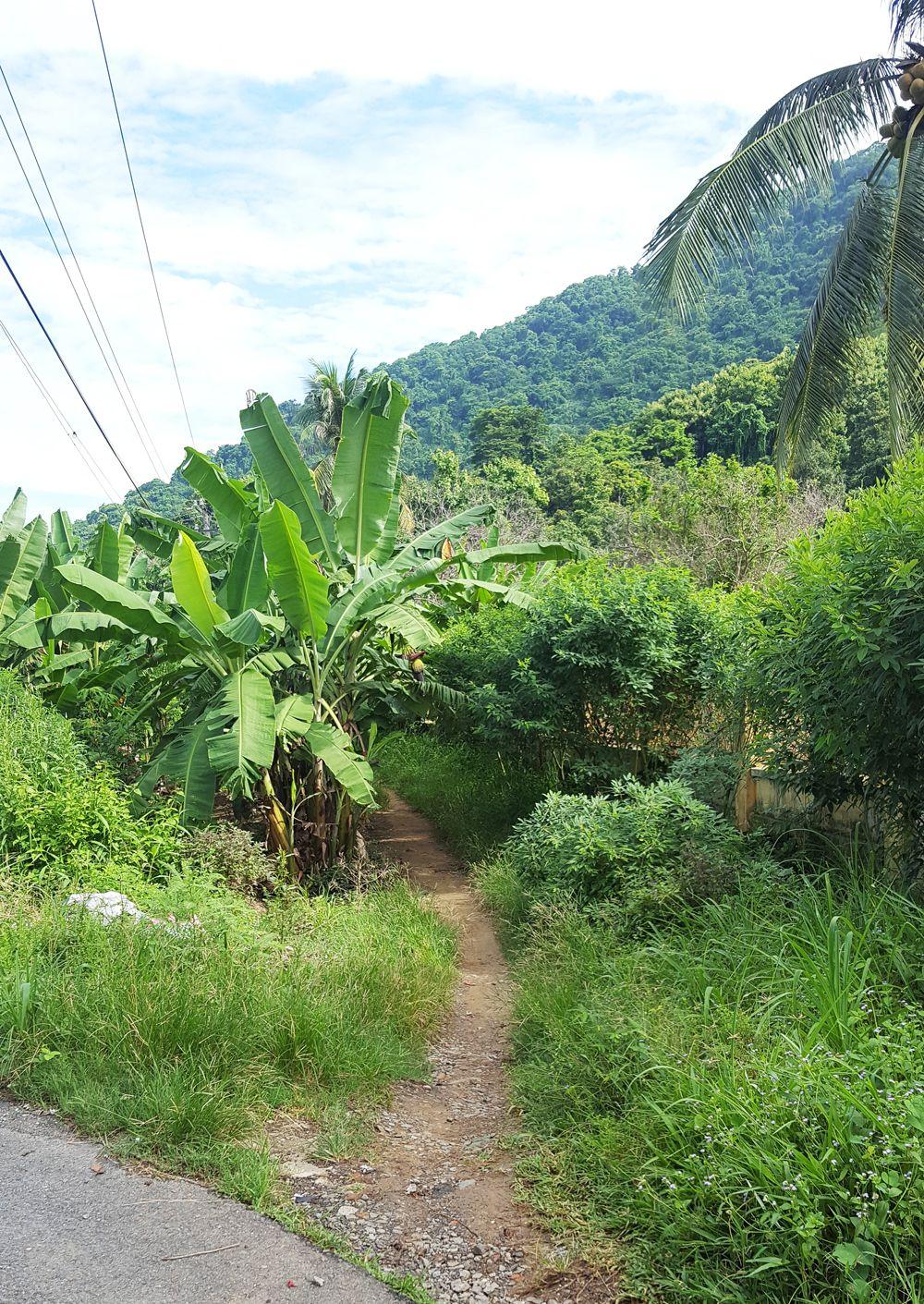 Con đường nhỏ đối diện nhà cô Năm dẫn lên núi Bà Đen