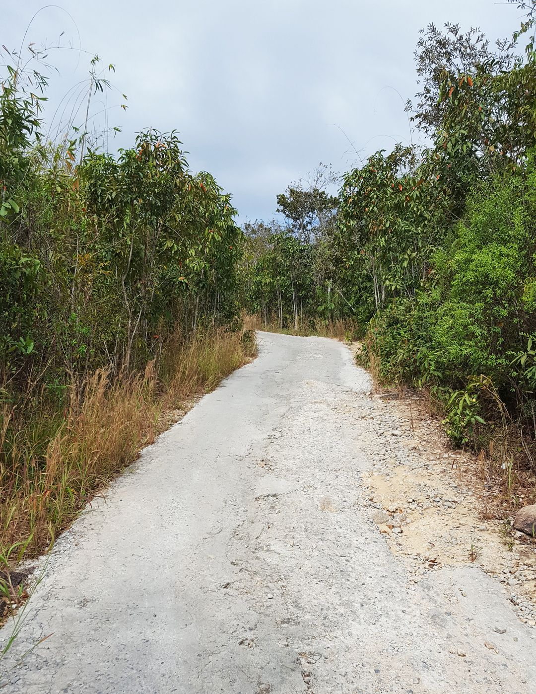 Đường đi vào đã được lát xi măng cho dễ đi