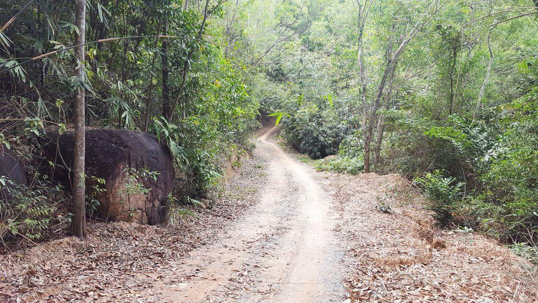 Đường mòn đi vào núi Dinh rất đẹp