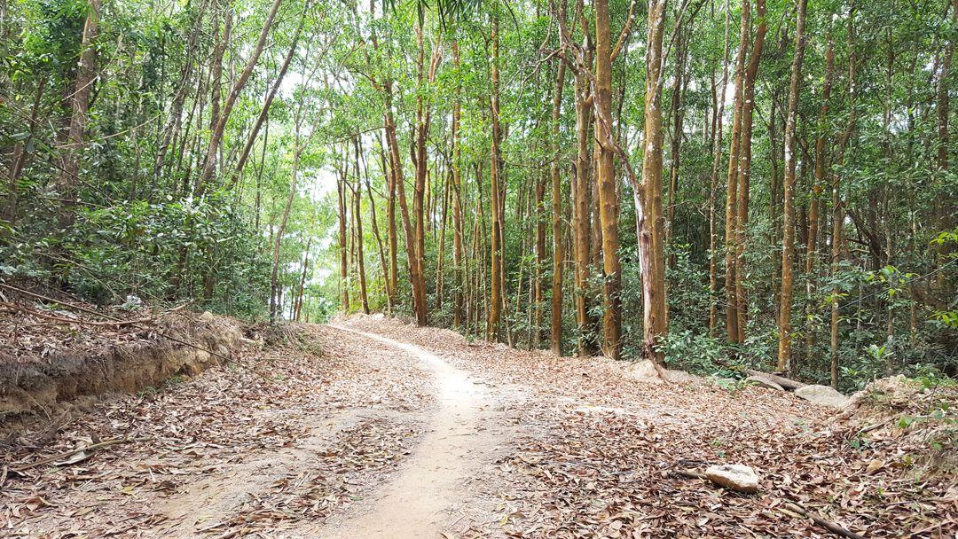 Đường vào núi Dinh rất đẹp với cây cối xung quanh