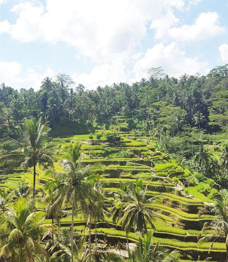 Chia sẻ kinh nghiệm du lịch bụi Bali - hình 32