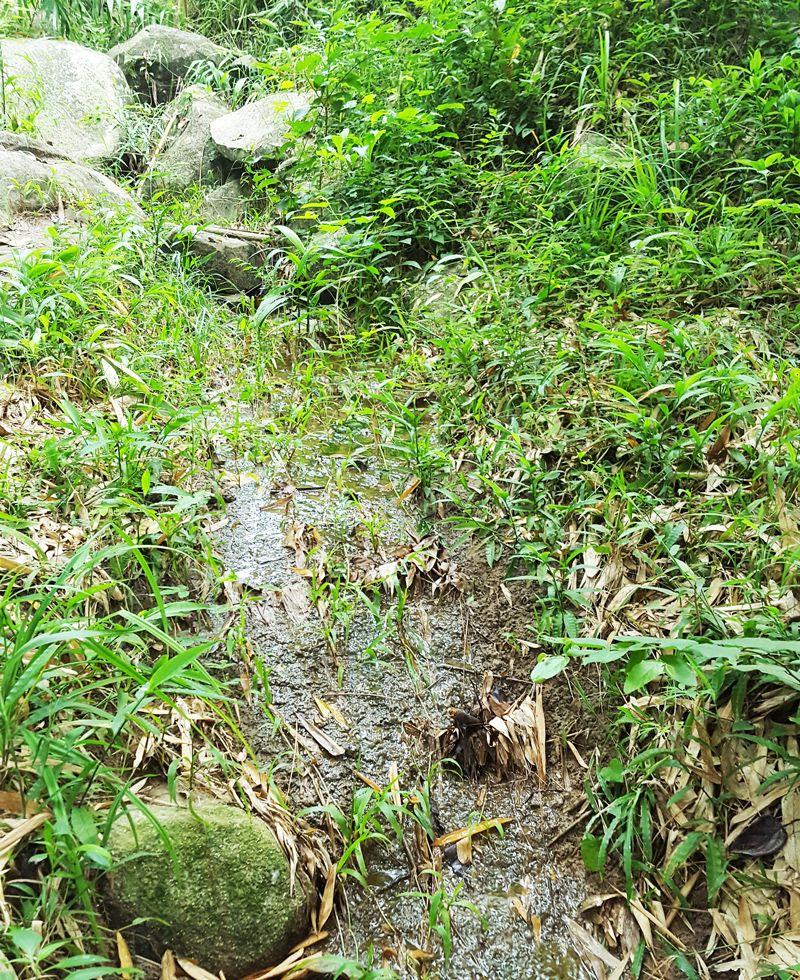 Hướng dẫn leo núi Chứa Chan dễ nhất đi đường ngắn nhất hình 13