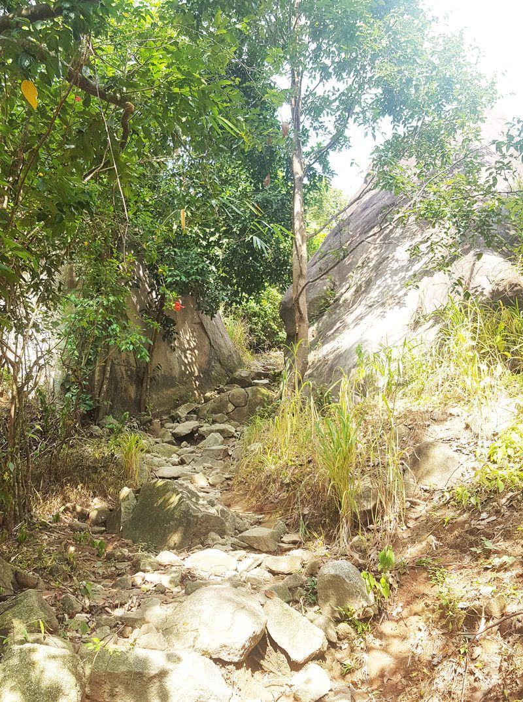 Hướng dẫn leo núi Chứa Chan dễ nhất đi đường ngắn nhất hình 5
