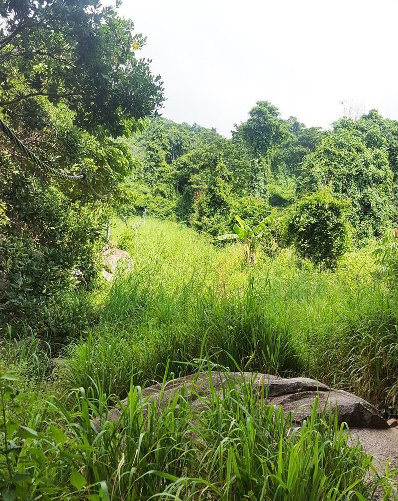 Hướng dẫn leo núi Chứa Chan dễ nhất đi đường ngắn nhất hình 7