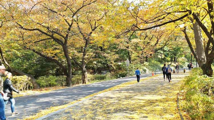 Chia sẻ kinh nghiệm du lịch bụi Hàn Quốc trong 8 ngày - hình 13 - Khu N-Seoul