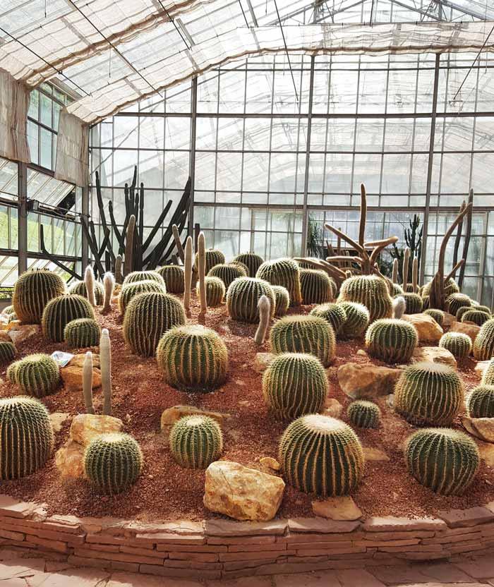 Kinh nghiệm du lịch bụi Thái Lan 24 - Nhà xương rồng Queen Sirikit Botanic Garden