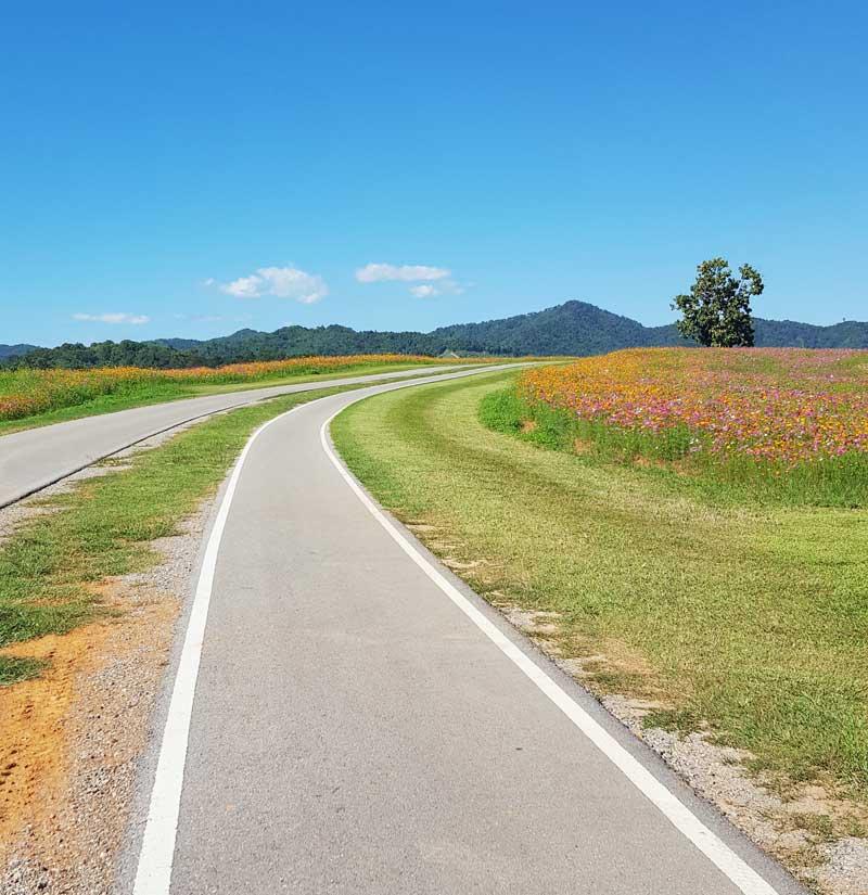 Kinh nghiệm du lịch bụi Thái Lan 9 - Singha Park Chiang Rai
