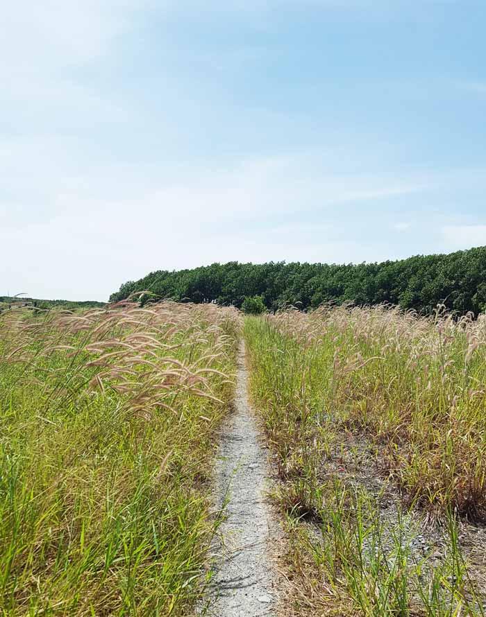Khám phá 9 cửa sông của hệ thống sông Cửu Long 14 - Con đường cỏ lau