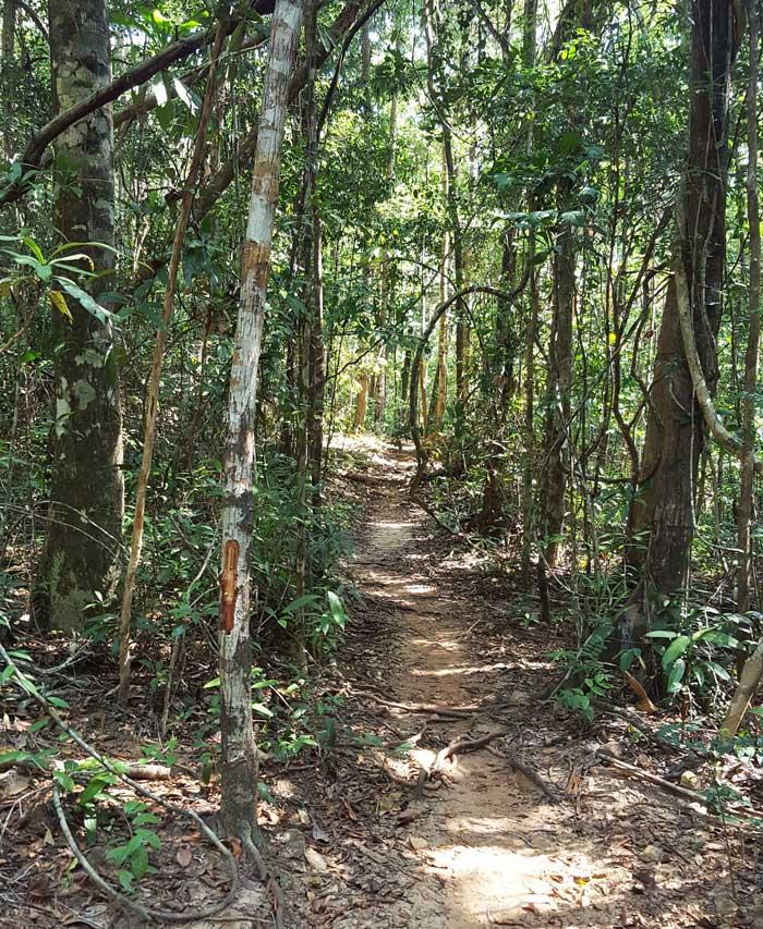Chia sẻ kinh nghiệm du lịch bụi đảo Koh Rong Sanloem 22 - Đường mòn trong rừng