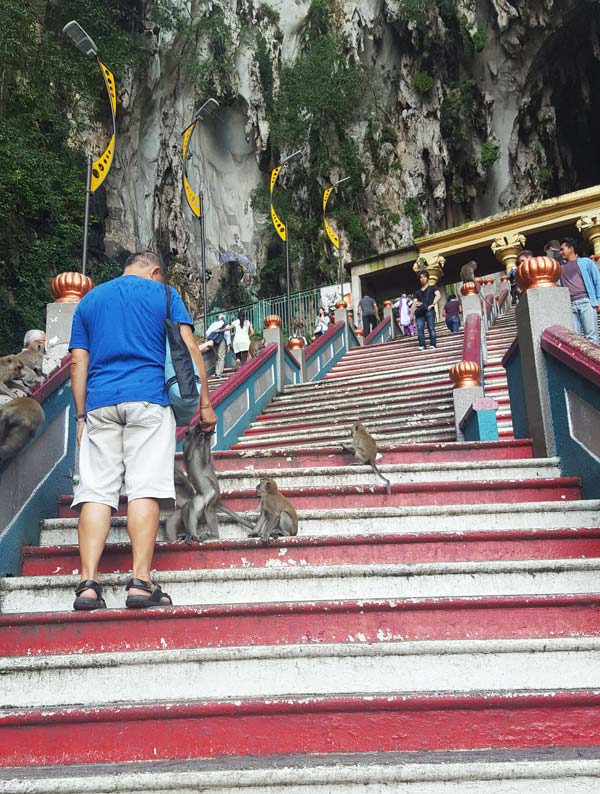 Chia sẻ kinh nghiệm du lịch bụi Malaysia - - Cho khỉ ăn