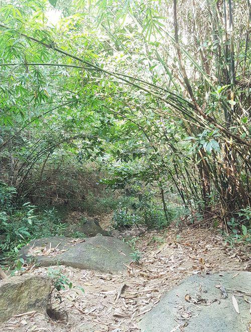 Chia sẻ kinh nghiệm leo núi Thị Vải - Đường lên cổng trời rừng tre