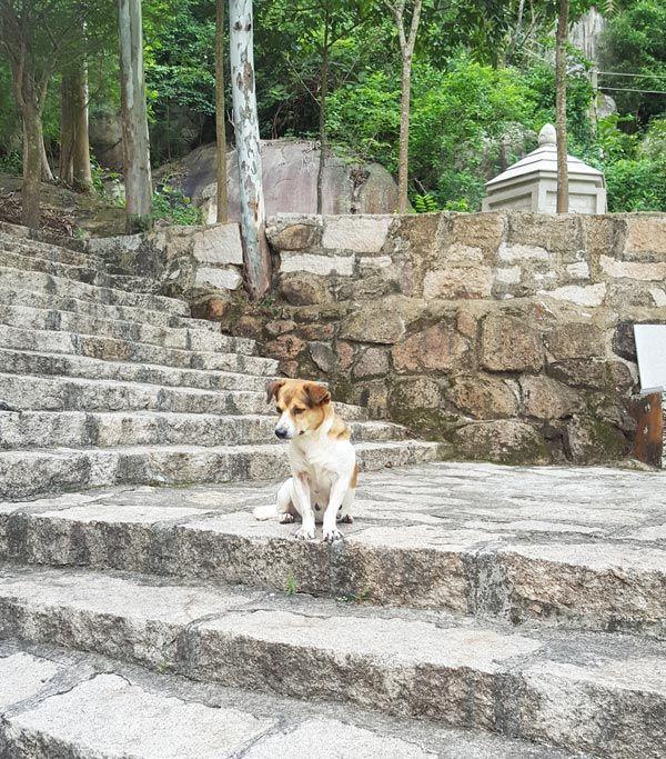Chia sẻ kinh nghiệm leo núi Thị Vải 8 - Chỗ nghỉ chân